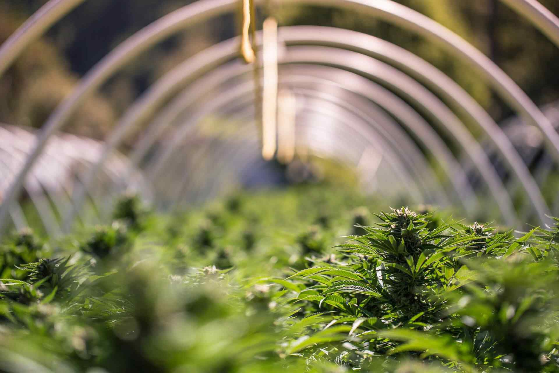 Oklahoma Cannabis Businesses in Limbo Without Banking Regulations