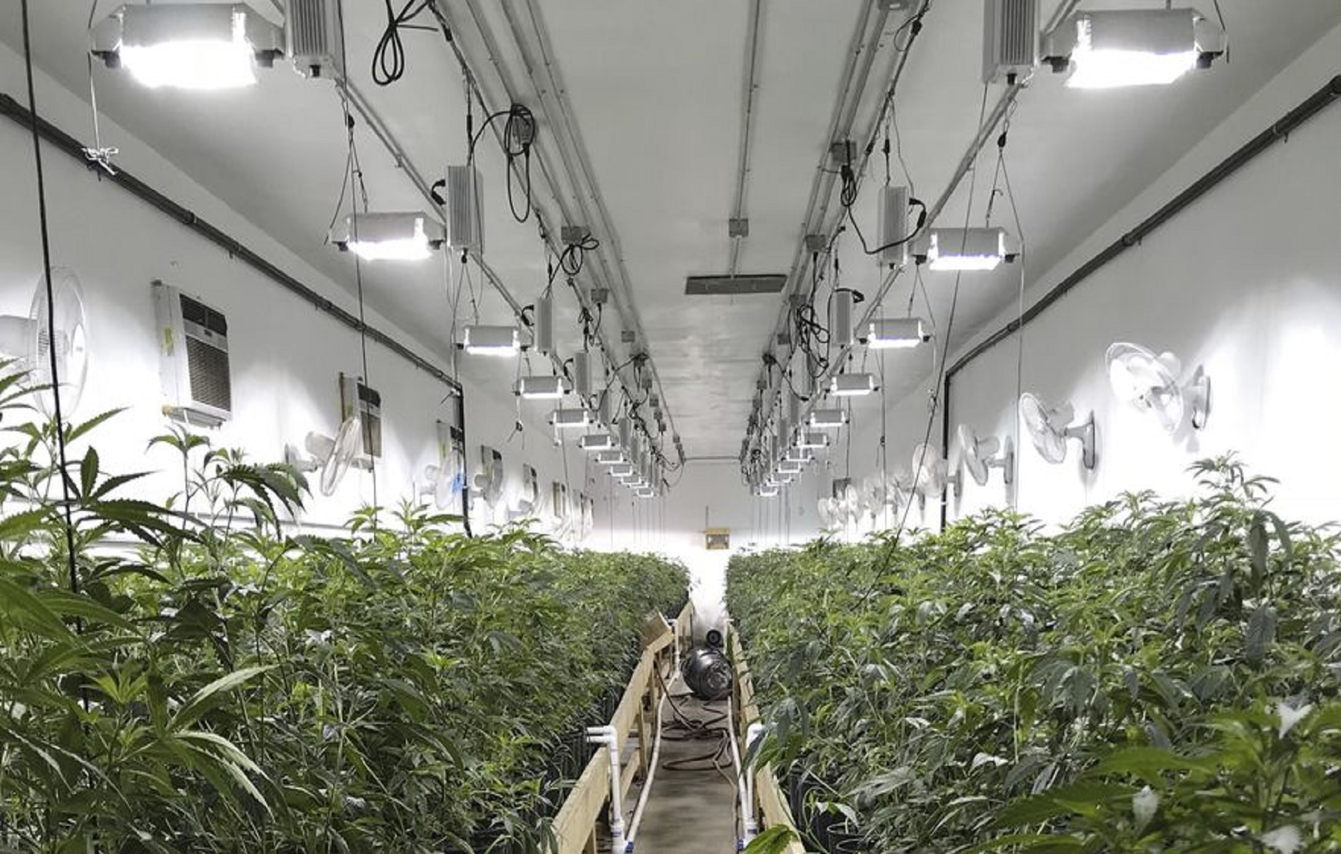 https://okweedtrader.com/wp-content/uploads/2019/04/Pic-of-MJ-Grower.jpg